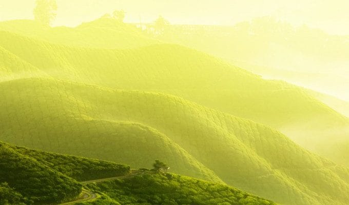 halpe tea plantations