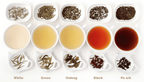 variety of flavors offered at halpe tea